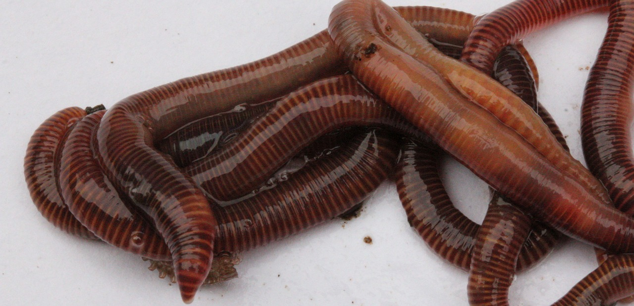 worms-2784915_1280